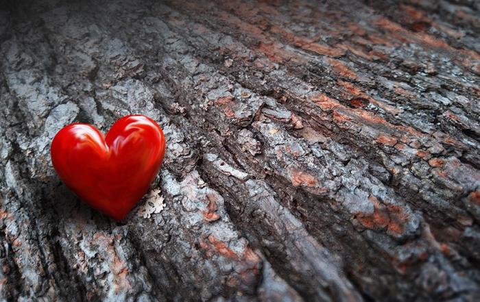 Rinde-mit-Herz